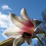 Tender Flower